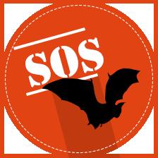 SOS chauves-souris